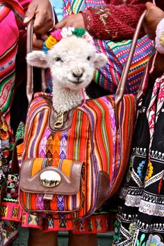 I think this is how I Want to me when I'm old: carrying a sheep around in a colorful boho bag to carnivals...kinda fits me