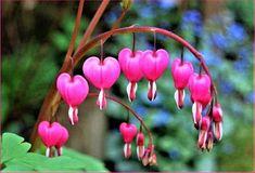 Heart Valance (35 pieces)