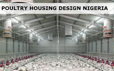The poultry farms for sale is strong durability. The frame of poultry farm uses cold-formed thin-walled steel components frame corrosion resistance strong. Woodworking Guide, Custom Woodworking, Woodworking Projects Plans, Poultry House, Poultry Cage, Poultry Farming, Chicken Cages, Chicken Houses, Types Of Poultry