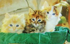 Beaux petits chatons. Vintage Cat, Animals, Little Kitty, Kittens, Wild Animals, Dog, Cards, Animaux, Animal