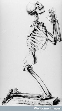 Skeleton in kneeling posture.