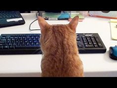 Don't Even Try Working From Home With Cats, Because Cats