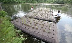 In what was said to be the first project of its kind at a public lake in New Jersey, two floating wetland islands were installed in Lake Hopatcong earlier this month in an effort to prevent the spread of algae.