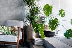 ダイナミックな葉が特徴のおしゃれ植物モンステラ。「一鉢持っているので増やし方を知りたい!」方が多いそう。モンステラはどの場所に置いてもインテリアをステキに見せてくれます。挿し木や茎伏せで増やし、お部屋を彩ってみませんか。