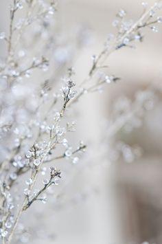 lavender-colored glasses...: Photo