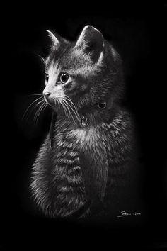 Kitten, drawn on black A3 paper