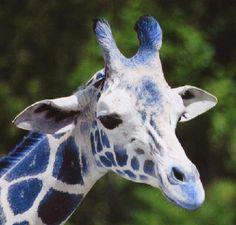 A Blue Giraffe! I like it! So funny! #gracepins