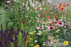 Prairie Garden® beplantingssysteem Prairietuin Prairieplant » Lageschaar Vaste Planten - Fleurige onderhoudsarme beplantingssystemen