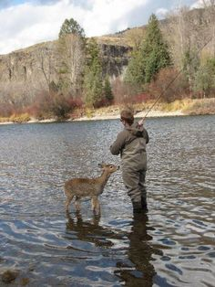 Deer walks right up to a fisherman...I guess they learned to differentiate between guys with rods and guys with shotguns...haha