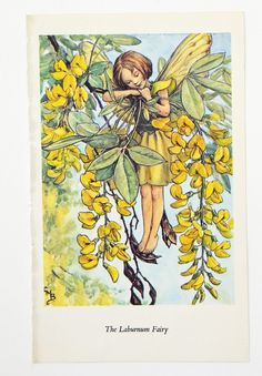 Laburnum Fairy, Flower Fairies Picture, Cicely Mary Barker Print, Nursery Art, Fairy picture by PeonyandThistlePaper on Etsy https://www.etsy.com/listing/198287809/laburnum-fairy-flower-fairies-picture