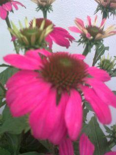 Een bloem op je hoed en 't is morgen weer goed!