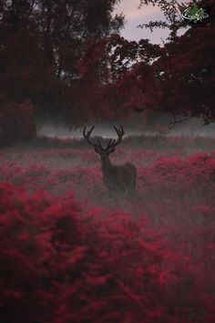 deer, animal, and red image Beautiful Creatures, Animals Beautiful, Cute Animals, Animal Photography, Nature Photography, Fashion Photography, Travel Photography, Aesthetic Photography Nature, Photography Flowers