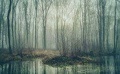Diese Fotos entstanden, während ich früh morgens im dichtesten Nebel durch die Lande fuhr (irgendwo im östlichen Mecklenburg Vorpommern nahe der Ostseeküste).