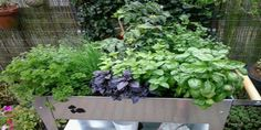 Plantjes kweken op stahoogte is bijzonder prettig bij het tuinieren zonder tuin. Ideaal voor op het dakterras, balkon, patio, binnentuin of kleine stadstuin. Door de 2 wieltjes is de kweektafel gemakkelijk verplaatsbaar naar een zonnige plek of schaduw plek.   Stort de bak vol met goede grond (49 liter), koop plantjes of kweek ze zelf op door in deze kweektafel te zaaien of voor te zaaien. Altijd eigen kruiden en groenten uit de eigen kweektafel.