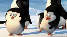 DreamWorks Penguins of Madagascar cutest gif ever