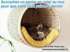 Vous aimeriez créer un petit nid douillet pour votre chat, sans que cela ne prenne trop de place chez vous ? Avec cette astuce, vous allez pouvoir faire plaisir à votre matou, sans encombrer l'appartement. Regardez.  Découvrez l'astuce ici : http://www.comment-economiser.fr/gain-place-creer-panier-perche-chat.html?utm_content=bufferb8051&utm_medium=social&utm_source=pinterest.com&utm_campaign=buffer
