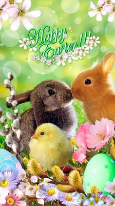 Happy Easter Gif, Happy Easter Greetings, Easter Art, Easter Bunny, Easter Eggs, Spring Pictures, Easter Pictures, Spring Day, Baby Animals