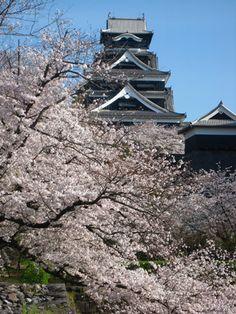 城内がピンク一色!桜満開♪散策グルメと楽しむ春の熊本城