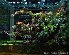 Tree Frog Terrarium, Fish Tank Terrarium, Gecko Terrarium, Aquarium Terrarium, Terrarium Plants, Glass Terrarium, Vivarium, Paludarium, Aquascaping