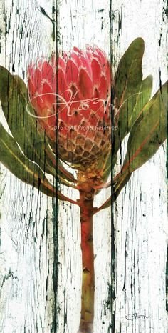 Pallet Painting, Pallet Art, Painting On Wood, Protea Art, Tea Bag Art, Botanical Drawings, Painting Flowers, Pictures To Paint, Brush Strokes