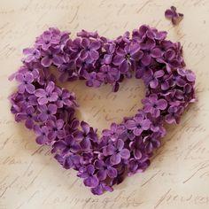 San Valentín fotografía fotografía de flor lila por GeorgiannaLane