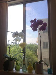 """Para dar as boas vindas a primavera nos EUA: as orquídeas que florescem no meu cantinho e um frase de Walt Disney que sempre inspirou a minha vida: """"Se quiser fazer as coisas acontecerem, fale menos e comece a agir! """" Feliz Final de semana para todos!"""