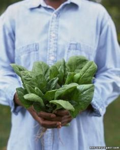 13 Easy-to-Grow Vegetables