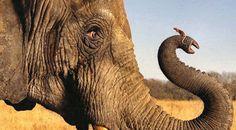 Olifanten en muizen