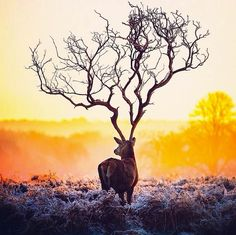 """""""Everyday is beautiful if you choose to see it"""" says Robert Jahns, also known as on Instgram. The German art director manipulates his photographs, transforming them into incredibly surreal images. Surreal Photos, Surreal Art, Photomontage, Surrealism Photography, Art Photography, Photography Classes, Wildlife Photography, Lapin Art, Painted Antlers"""
