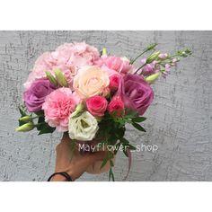 Цветы лихнис фото и описание