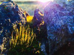 Catching the setting winter sun, mossy wall Co. Tyrone N.Ireland -