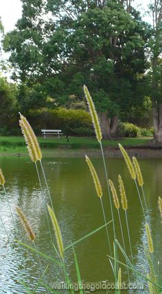Visit the Gold Coast Botanic Gardens and have a picnic.