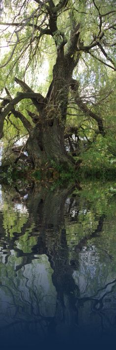Spooky tree Spooky Trees, My Fantasy World, Old Trees, River, Plants, Outdoor, Woods, Outdoors, Plant