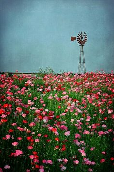 Windmill & wild flowers---reminds me of the plains. Farm Windmill, Beautiful Flowers, Beautiful Pictures, Old Windmills, Country Scenes, Down On The Farm, Old Barns, Le Moulin, Beautiful World