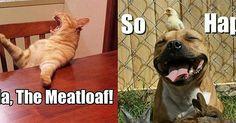 12 Animal Memes That Make Us LOL