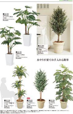 Indoor Plants, Interior, Flowers, Balcony, Rooms, Gardening, Blog, Furniture, Ideas