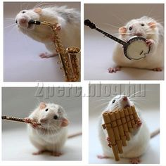 And you thought the only thing rats could do is look cute ! Creature Feature, Rats, Musicals, Bunny, Creatures, Teddy Bear, Wool Felting, Hedgehogs, Mice