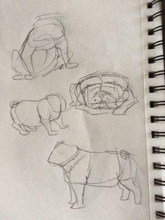 Bull dog  Concept art