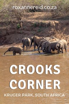 Visiting Kruger National Park? If you're in the north, don't miss a visit to Crooks Corner, Kruger National Park. Find out about its infamous backstory as well as other things to do in the area, like visiting Pafuri picnic site, going for a game drive or hiking the 3-night Nyalaland Wilderness Trail. There are also tips on where to stay in the far north of Kruger Park, from Punda Maria camp to Pafrui Border camp. #safari Union Of South Africa, East Africa, Kruger National Park, National Parks, Wagon Trails, Wilderness Trail, Biggest Elephant, Across The Border, Slow Travel