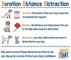 The 3D Model for Dog Training: Duration, Distance, Distraction | Susan Garrett's Dog Training Blog Therapy Dog Training, Dog Training Books, Therapy Dogs, Dog Training Tips, Dog Status, Something Like You, Positive Dog Training, Good Citizen, Foster Dog