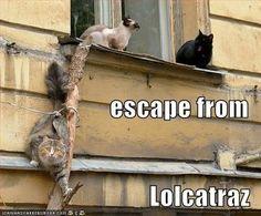 Escape from LOL-CAT-raz