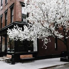 Image via We Heart It #art #beautiful #building #caffee #city #flower #flowers #grunge #life #nature #newyork #pale #pastel #perfect #spring #street #tree #winter #excellence #kinfolk