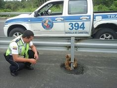 A sloth holds on to the post of a traffic barrier on a highway in Quevedo, Ecuador. Officers found the sloth after it had apparently tried to cross the street and returned the animal to its natural habitat