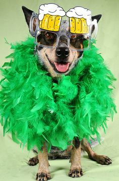 Ready for the Irish parade via 25 Ridiculously Cute St. Patrick's Day Pets