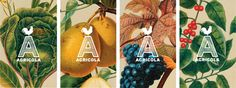Agricola identity designed by Mucca.