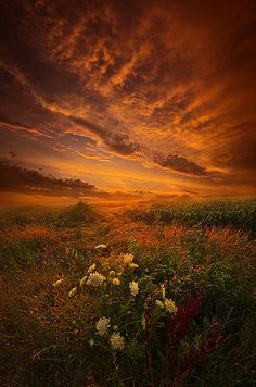 """Waiting for the Day to Begin"" Wisconsin Horizons by Phil Koch. Lives in Milwaukee, Wisconsin, USA. http://phil-koch.artistwebsites.com https://www.facebook.com/MyHorizons"