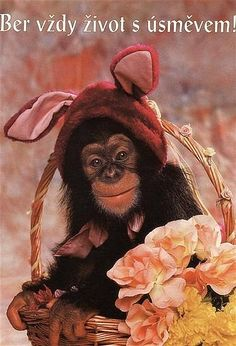 Patriots, Good Morning, Monkey, Humor, Animals, Africa, Buen Dia, Jumpsuit, Animales
