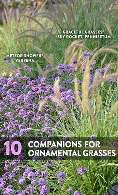 10 Companions for Ornamental Grasses in the Landscape You've selected a beautiful ornamental grass to add to your landscape. Now, what should you plant with it? Here are ten ideas for perfect pairings with annual and perennial grasses. Long Blooming Perennials, Perennial Grasses, Shade Perennials, Flowers Perennials, Shade Plants, Ornamental Grasses For Shade, Ornamental Grass Landscape, Landscape Curbing, Landscape Grasses