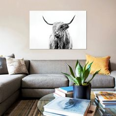 Fancy | Portrait Of A Highland Cow Canvas Print