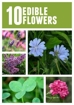Spring Foraging: Edible Flowers www.fromscratchmag.com #edibleflowers